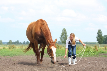 commanding: Young blonde woman commanding chestnut horse to lie down on the ground