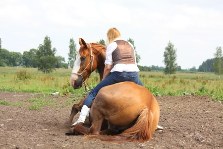 horse blonde: Young beautiful blonde woman sitting on the chestnut lying on the ground on command horse