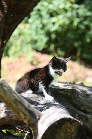 Black kitten sitting on the tree branch meowing Stock Photo - 17116118