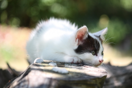 Cute white kitten with black markings resting on the tree branch photo
