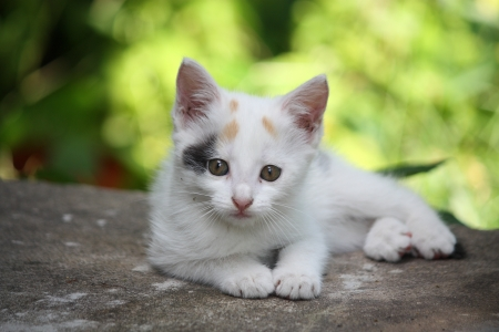 White kitten lying on the ground photo