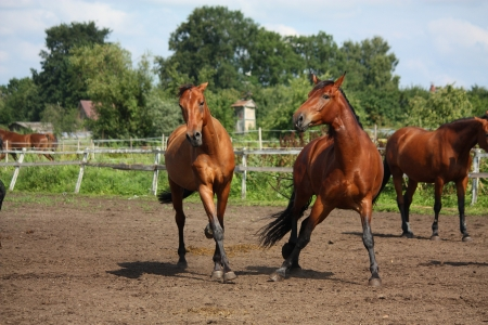 Two horses playing with each other at the field in summer photo