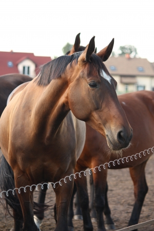 elektrischer Zaun: Brown Pferd stehend hinter dem Hof ??Elektrozaun Lizenzfreie Bilder