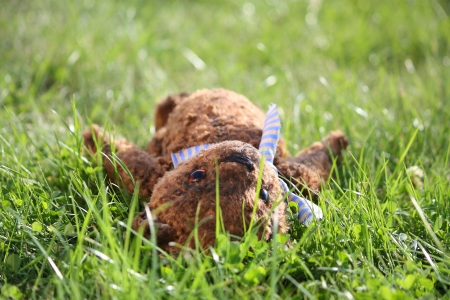 Cute brown teddy bear in the garden in summer Stock Photo - 17627638
