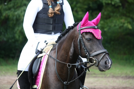 horse competition: Black pony portrait with rider during horse competition