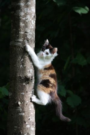 ni�o escalando: Adorable tricolor escalada gatito en el �rbol