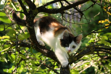 Cute three colored small kitten gnawing on tree branch