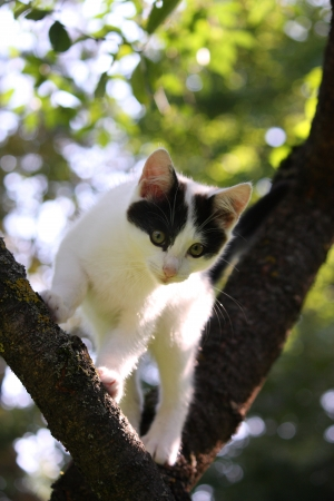 Adorable three colored kitten climbing on the tree