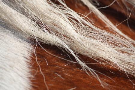 piebald: Crin de caballo picazo cerca Foto de archivo