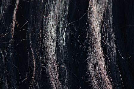 Beautiful black horse mane close up  photo