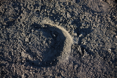 Horse hoof print in the ground close up photo