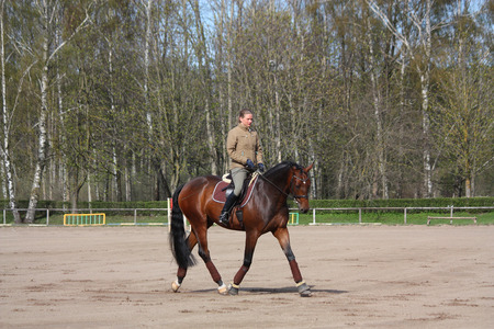 Young blonde woman riding latvian breed bay horse, working trot photo