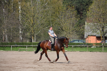 gait: Young blonde woman riding latvian breed bay horse, working trot Stock Photo