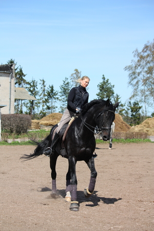 gelding: Blonde woman galloping on beautiful latvian breed horse Stock Photo