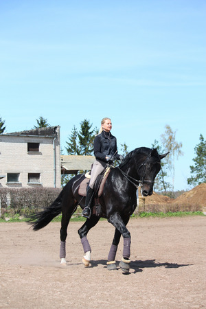 gelding: Blonde woman trotting on beautiful latvian breed horse Stock Photo