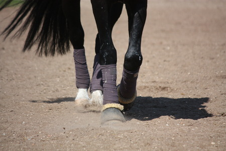 Close up of black horse legs walking