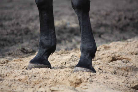 gelding: Black horse standing on the ground hoofs close up Stock Photo