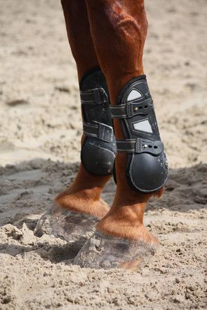 splint: Chestnut horse legs close up with protective splint boots