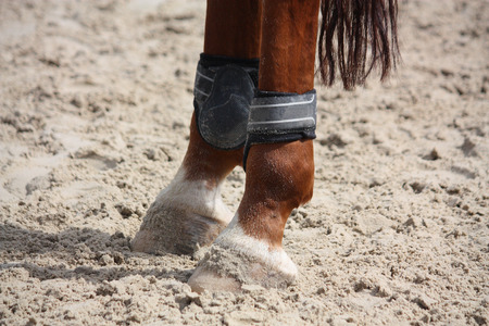 Chestnut horse legs close up with protective splint boots