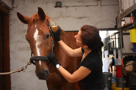 horse collar: Brunette woman grooming brown horse for the riding in the stable Stock Photo