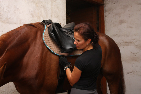 girth: Brunette woman saddling up brown horse in the stables Stock Photo