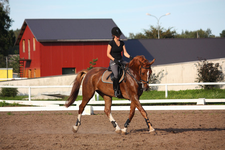 Brunette woman riding trotting chestnut horse on a sunny day Imagens