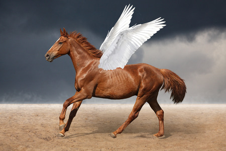 Beautiful brown pegasus horse galloping wild on sky background photo