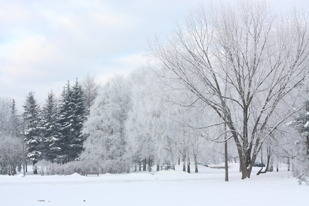 Beautiful winter view in the park
