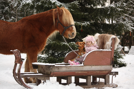 draught: Cute little girl sitting in the sledges with dog and big palomino draught horse standing near Stock Photo