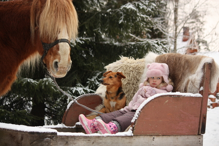 draught horse: Cute little girl sitting in the sledges with dog and big palomino draught horse standing near Stock Photo