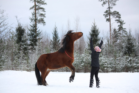 commanding: Teenager girl commanding bay horse to rear in winter forest