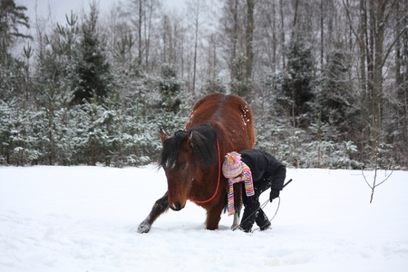commanding: Teenager girl commanding brown horse to bow in the winter forest
