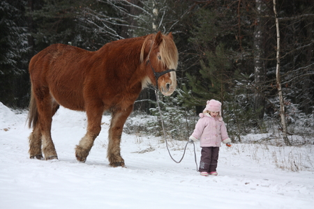draught: Cute little girl leading big draught horse by the forest in winter