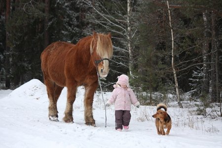 draught: Cute little girl leading big draught horse and small dog by the forest in winter