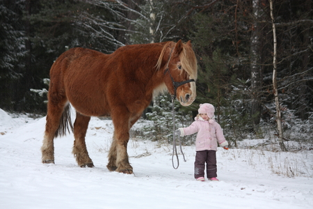 draught horse: Cute little girl leading big draught horse by the forest in winter