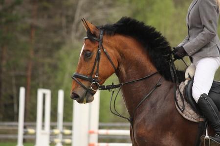 horse show: Beautiful sport horse portrait in horse show Stock Photo