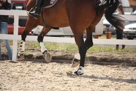cantering horse: Cantering horse legs close up during show