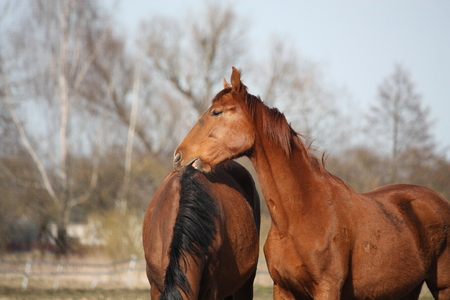 gelding: Two adorable horses nuzzling each other with affection
