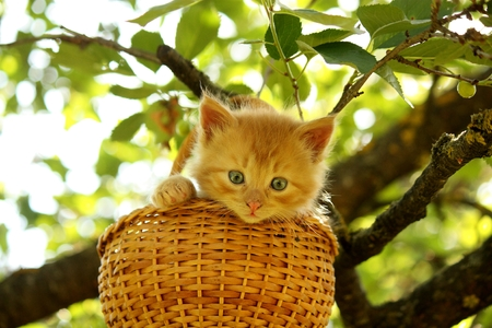 Adorable ginger kitten sitting in the basket in summer photo