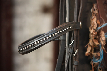 bridle: Close up of leather horse bridle brownband Stock Photo