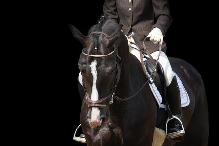 Schöne braune Sportpferd Porträt auf schwarzem Hintergrund isoliert Standard-Bild