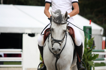Portraot of white horse during show competition