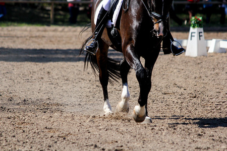 Close up of a horse legs during show competition