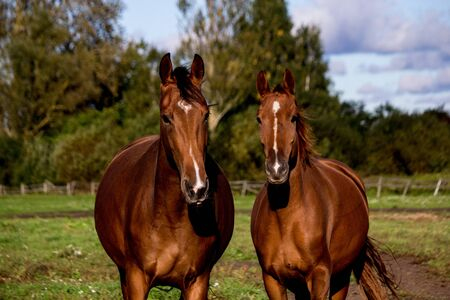 Two brown horses standing together, mom