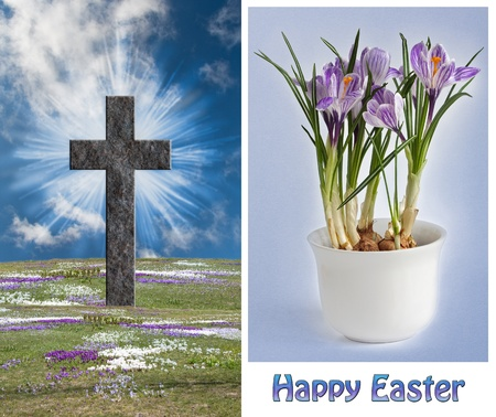 One Resurrection Cross  on a field of blooming crocus and a image of crocus in a pot