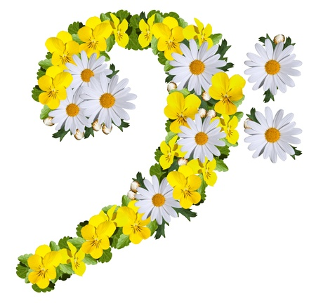 F clef made of daisies and yellow violets isolated on white photo