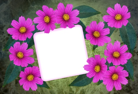Textured greetingcard with pink cosmea flower and a blank card photo