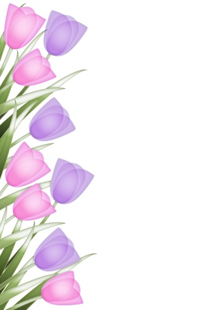 april flowers: Spring background with border of pink and purple tulips