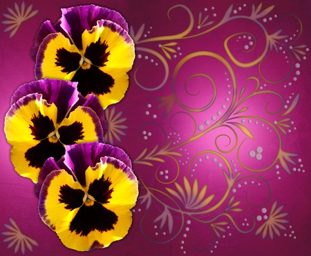 Three yellow black purple pansies on magenta background with colorful swirls photo
