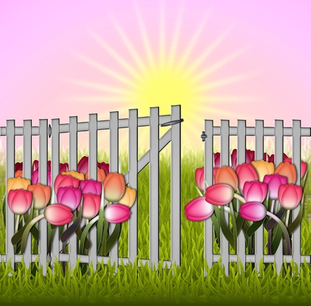 cottage garden: Sun rising over a cottage garden, tulips grass fence with gate